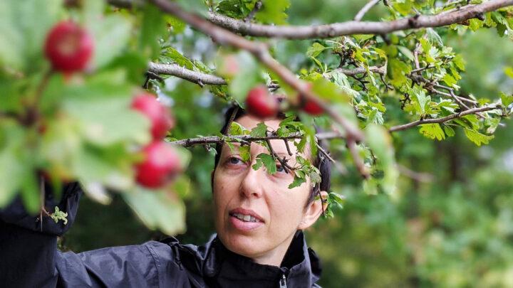 Wild harvest in September in the frizzer