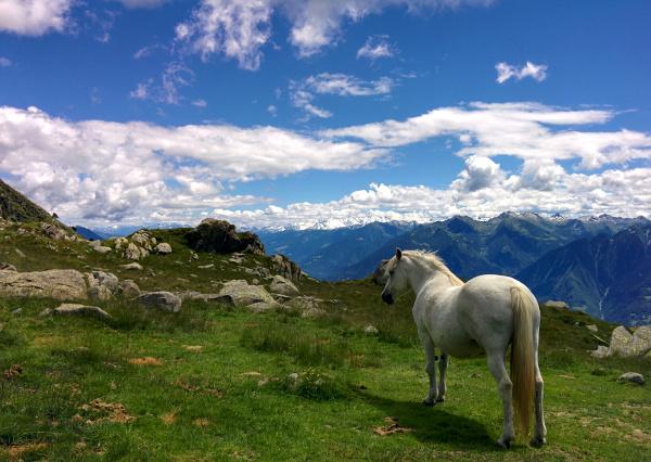 Alpe Visogno a 2000 m