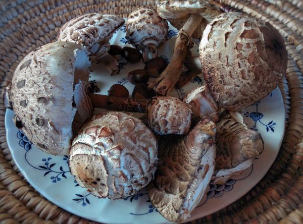 autunno-sulla-costiera-dei-cech-mazze-di-tamburo