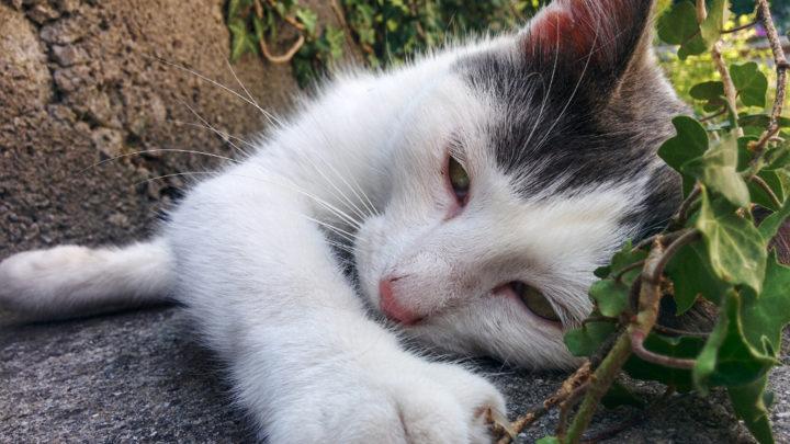 Il gatto nuvoloso, Compost e altri animali.
