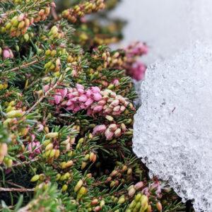 Prima dell'inverno. Sole caldo neve e freddo. In 4 fotografie.